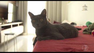 Projeto CUGA – Castre Uma Gatinha Abandonada